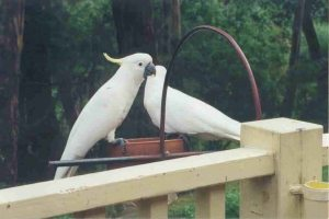 The only thing that could make coffee and a scone taste better was to share the patio with such beautiful birds!