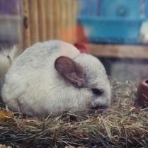 A Hamster at the Paris Bird Market